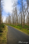 road to papuma1