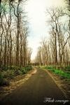 road to papuma2
